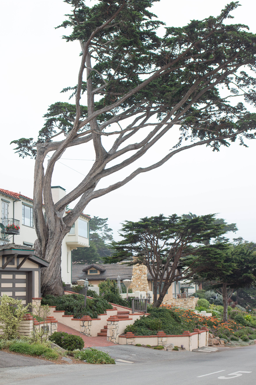 Halloween Weekend in Carmel-by-the-Sea